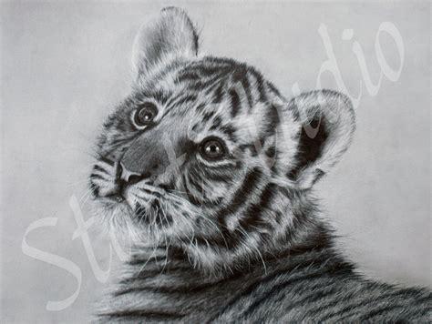 tiger cub drawing  jamiepickering  deviantart