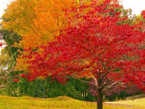 trees with fall foliage orange fall trees orange and red fall tree leaves fall foliage pinterest