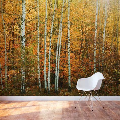 autumn birch tree forest wall mural