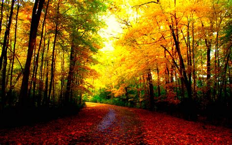 Beautiful Nature Fall Desktop Backgrounds by Beautiful Autumn Wallpapers Wallpaper Cave