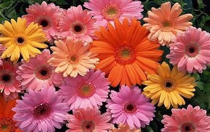 Flowers Wallpapers Wallpapercave