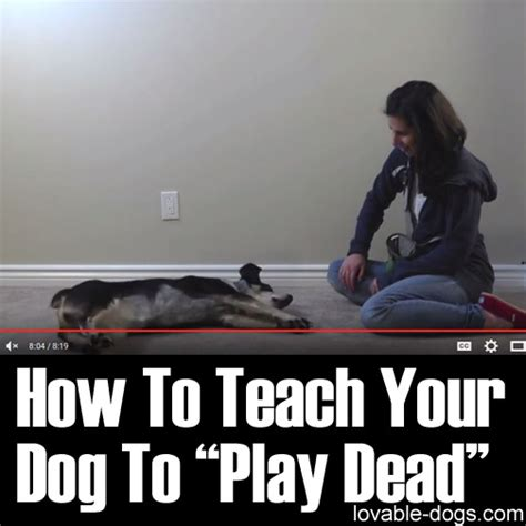 how to teach your to play dead lovable dogs how to teach your dog to play dead lovable dogs