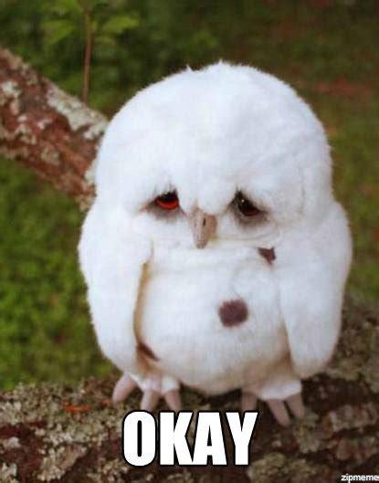 Sad Animal Memes - sad owl furby with puppy dog eyes