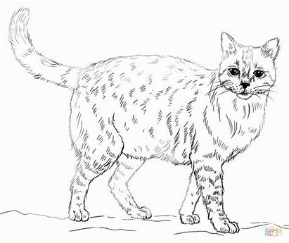 Realistic Coloring Pages Animal Printable Cat Animals