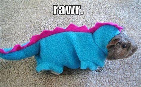 65 Best Savage Animals Images On Pinterest