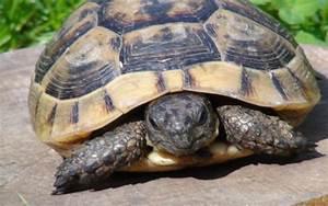 HD Cute Tortoise Wallpaper | Download Free - 119048