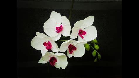 how to make orchids bloom how to make phalaenopsis orchid from crepe paper craft tutorial youtube