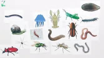 sofa preise bestimmen lebewesen heimische bäume und wirbellose tiere biologie lernen