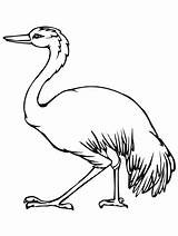 Australian Emu Template Animal Coloring Printable Templates Pages Getcolorings Print sketch template