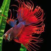 poisson pour aquarium conseils et astuces aquarium animalerie truffaut