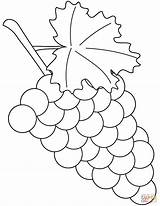 Grapes Coloring Pages Printable Grape Supercoloring Drawing Skip Leaf Fruit Paper Crafts Categories sketch template