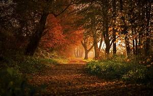 Nature, Landscape, Forest, Fall, Path, Leaves, Trees, Shrubs, Sunlight, Germany, Morning, Europe