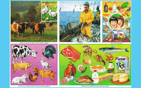 lamina de alimentos de origen animaal alimentos de origen animal imagenes wallpapers