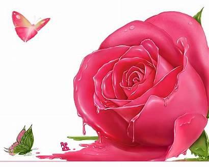 Rose Wallpapers Ali Roses Pink Flower Flowers
