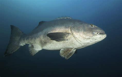 pet carnivorous fish learn    care