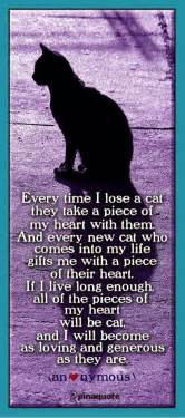 cat grief cat loss poems and quotes quotesgram