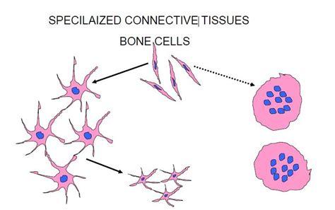 bone at southern california of health sciences