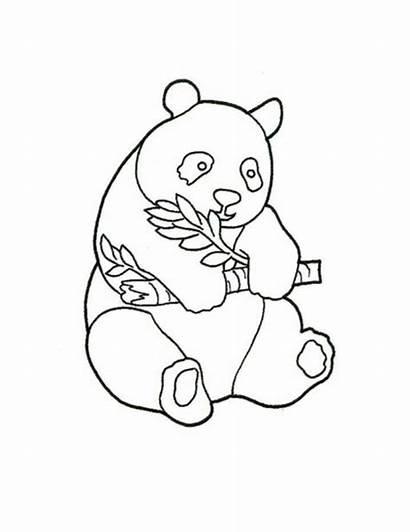 Panda Coloring Bear Pages Drawing Bears Printable