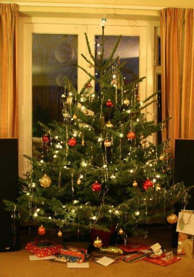 christmas tree alive tips  keeping