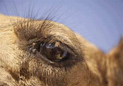 Camel Eye Gurgaon Relate Ll Things Indiatimes