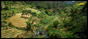 Analog Forestry and Integrated Landscape Management in Sri ...