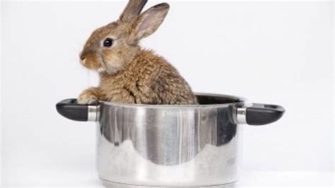 How To Cook An Easter Bunny