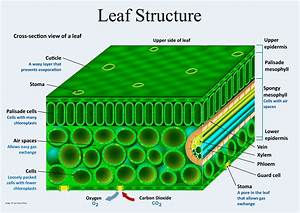 Plant Structure And Function In 2020