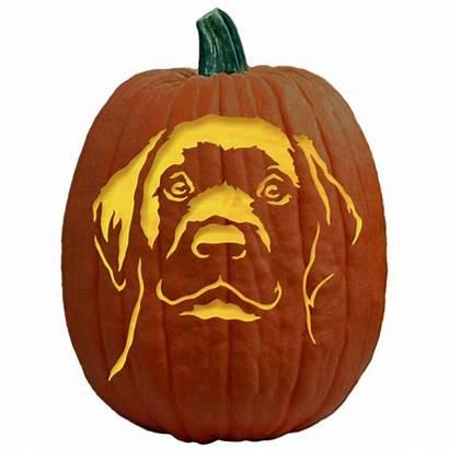 Pumpkin Carving Labrador Puppy Pattern Stencils Dog