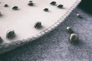 Larve Mite Alimentaire : lutter contre les mites comment les conseils de mon ~ Nature-et-papiers.com Idées de Décoration
