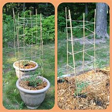 Bamboo Stakes And Twine Tomato Trellis Wrap The Twine Up