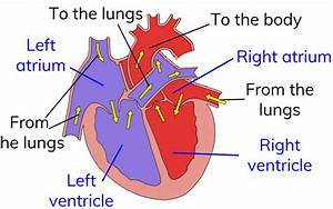 Egg cell diagram gcse choice image how to guide and refrence heart diagram bbc bitesize choice image how to guide and refrence ccuart Choice Image