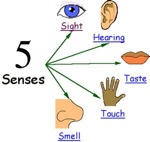 Image result for senses