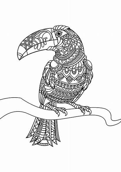 Coloring Toucan Birds Mandala Bird Printable Coloriage