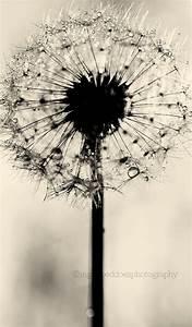 Dandelion print, dandelion wall art, black and white ...