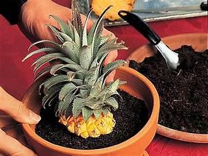 plante d interieur originale atlubcom With affiche chambre bébé avec plantes d intérieur fleuries en hiver
