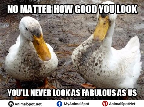 Funny Duck Meme - duck memes