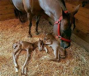 Newborn Horses | Another Day At The Ranch | Pinterest ...