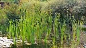 Wasserpflanzen Teich Kaufen : 10 imposante wasserpflanzen f r den gartenteich garten ~ Michelbontemps.com Haus und Dekorationen