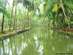 Kerala Rain Hd Wallpapers | Joy Studio Design Gallery ...