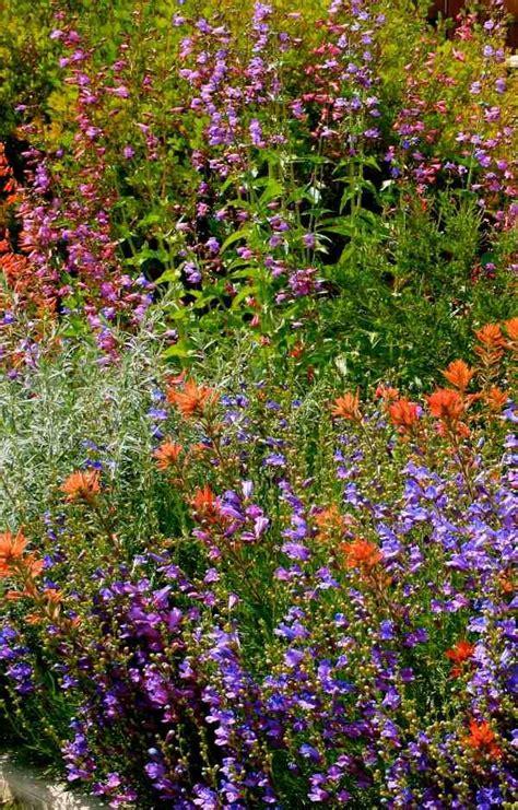 gardening  native plants