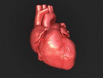 Heart Healthy Hearth Human Health Factors Risk