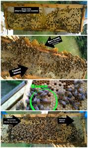 A Look Inside The Hive  A Visual Guide  U2013 My Adventures In