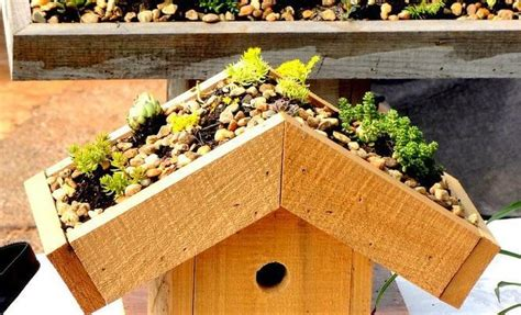 green roof birdhouse plans plans diy  wooden