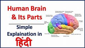 Human Brain  U0026 Its Parts Simple Explaination In Hindi