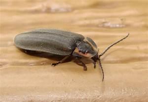 Insecte De Maison : qu est ce qu un insecte espace pour la vie ~ Melissatoandfro.com Idées de Décoration
