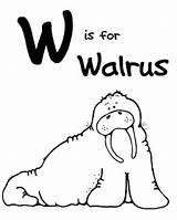 Coloring Animal Walrus Letter Printable Zoo Morse Moms Being Printables Clipart Coloriages Colouring Alphabet Lilly Cane Welovebeingmoms Animaux Coloriage Album sketch template