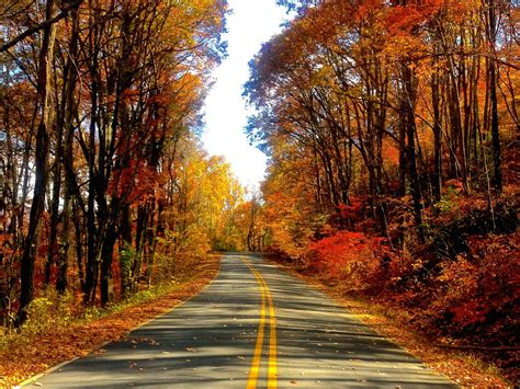 Autumn Roads Wallpapers by Autumn Road Hd Wallpaper Free Autumn Downloads