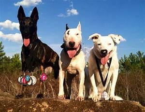Dog Sport Competition For Everyone   UpDog Challenge - Dog ...