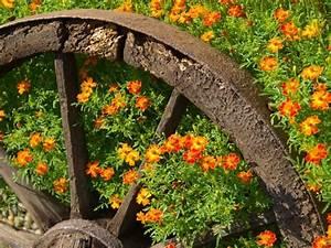 Parterre De Plante : plantes de parterre conseils jardinage famiflora le plus grand centre de jardinage de belgique ~ Melissatoandfro.com Idées de Décoration