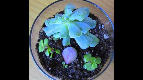 terrarium garden succulent plants youtube